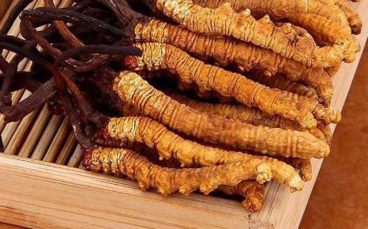 Ярсагумба тибетское лекарство. Не гриб не насекомое